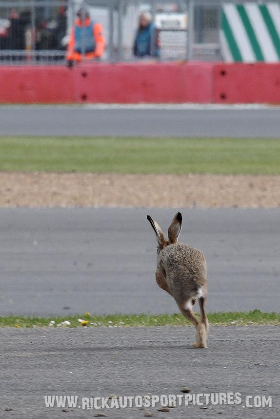 Easter Bunny WEC Silverstone 2014